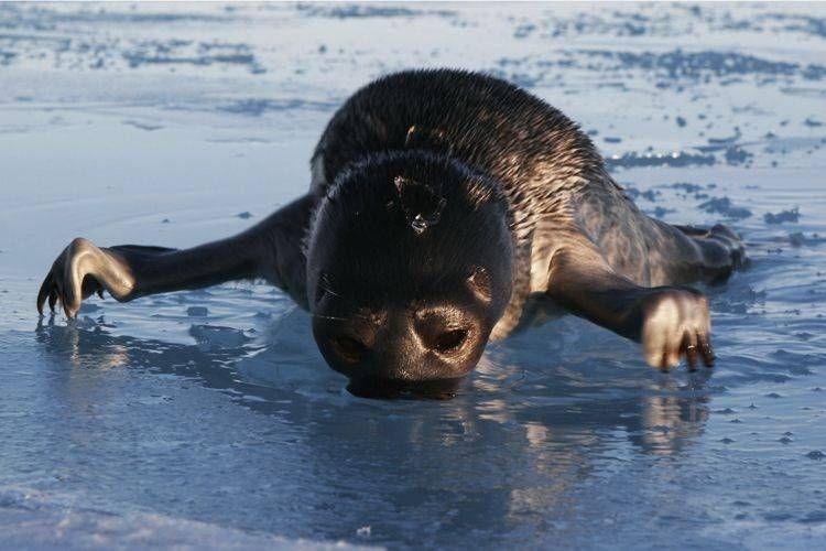 صور الحياة البرية والطبيعة في المحيط القطبي الشمالي