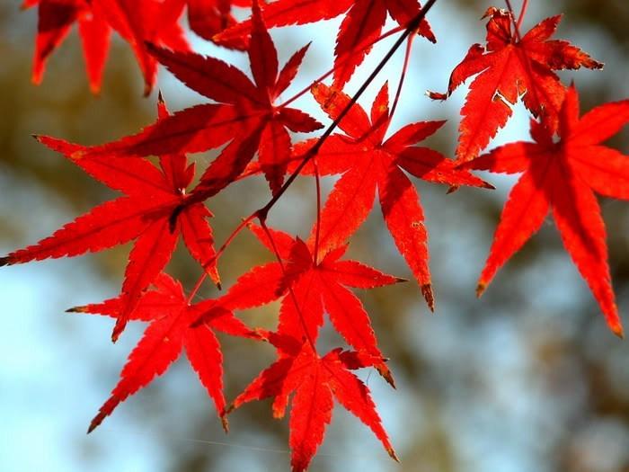 صور اوراق الاشجار في الخريف