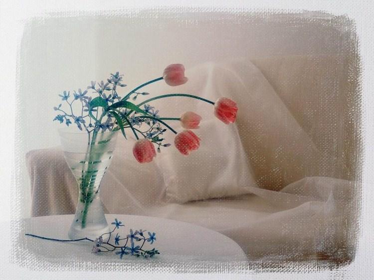صور زهور طبيعية جميلة جدا