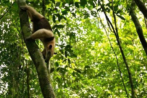 صور من الغابات