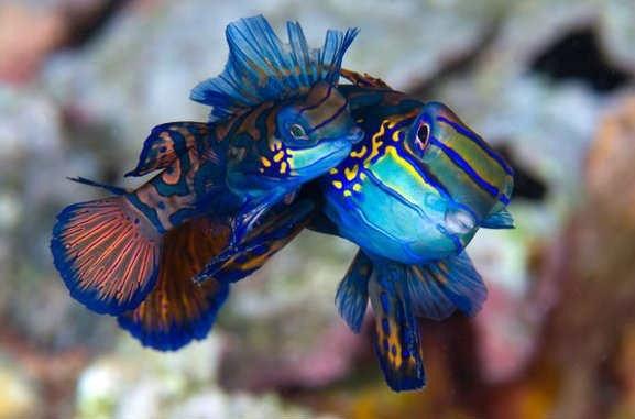 اجمل صور من اعماق البحار والمحيطات