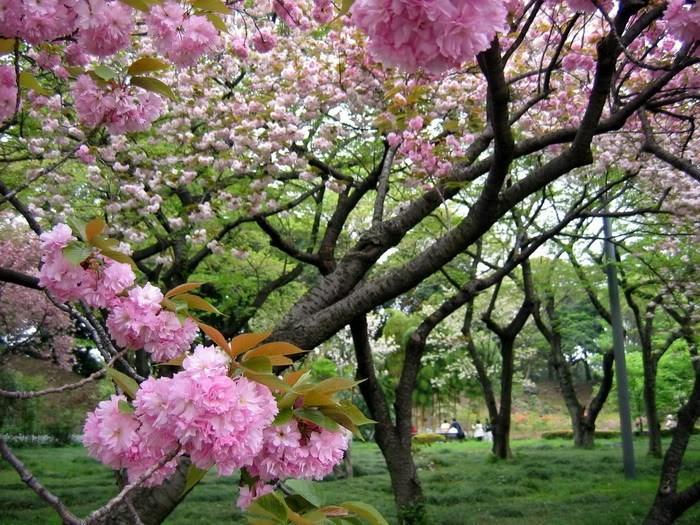 الطبيعة والحياة - صور في منتهى الجمال والروعة