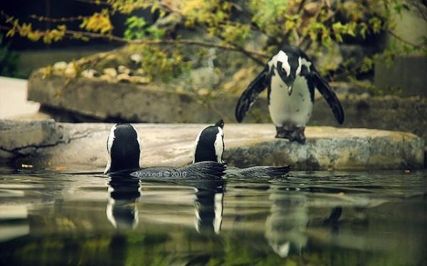 حديقة الحيوانات في تركيا اسطنبول