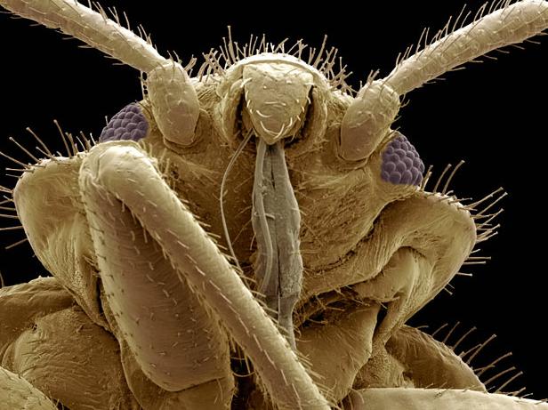 12 صورة «مُكبرة» لعالم الحشرات: أكبر من حجمها الأصلي بمليون مرّة