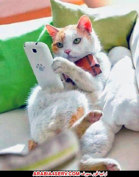 صور قطط لطيفة روعة