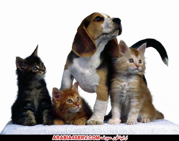 صور كلاب مع قطط