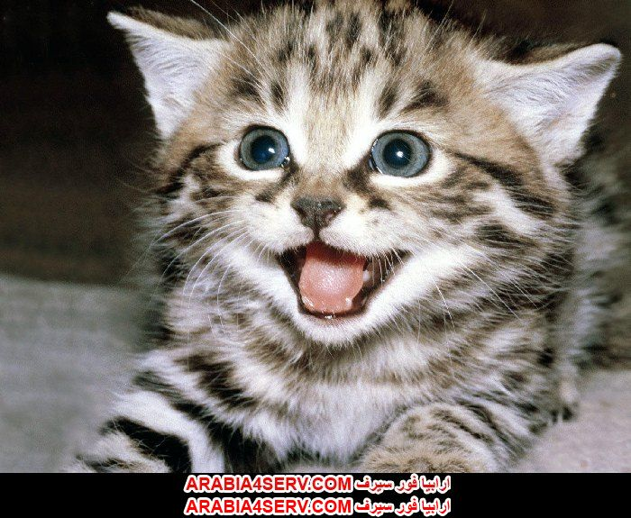 صور لقطط جميلة جدا كيوت