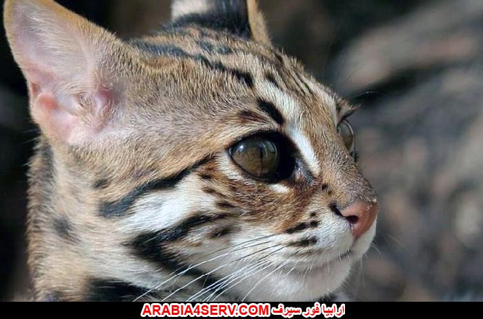 مشاهدة صور قطط اون لاين جميلة جدا